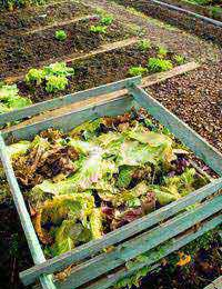 Composting What You Can Compost What You